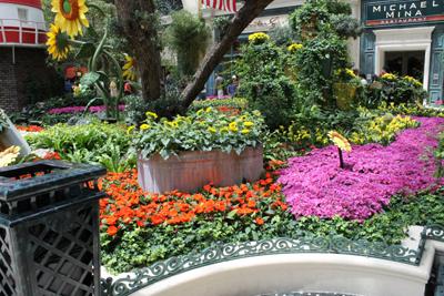 Mini garden 2